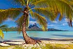 Through the leaves - French Polynesia L460 (sizes: 400x600; 900x600; 1350x900mm)