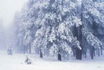 Frosts in the park - USA L422 (sizes: 400x600; 600x900; 900x1350mm)
