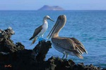 Galapagos moment - Ecuador L438 (sizes: 400x600; 600x900; 900x1350mm)