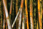 Bamboo forest - China L512 (sizes: 400x600; 600x900; 900x1350mm)