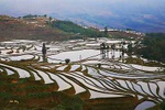 Terrace fields - China L515 (sizes: 400x600; 600x900; 900x1350mm)