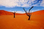 Spirit of the desert - Namibia L552 (sizes: 400x600; 600x900; 900x1350mm)