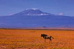 Foot of Mt Kilimanjaro - Kenya L554 (sizes: 400x600; 600x900; 900x1350mm)